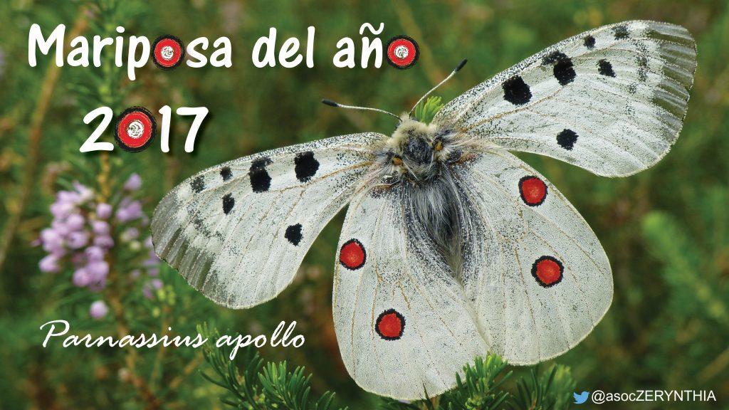 La apolo (Parnassius apollo) es la Mariposa del Año. Autor: ZERYNTHIA.